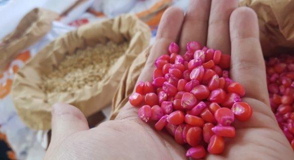 Governador entrega 60 toneladas de sementes em Matriz neste domingo (23)