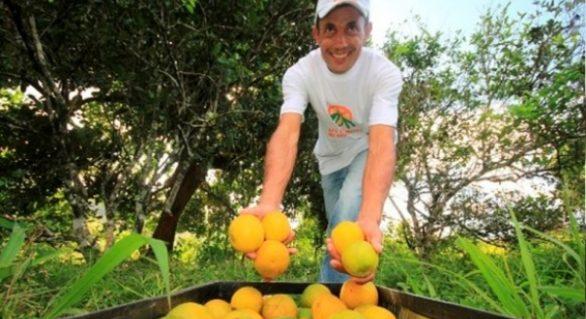Estado promoverá primeiro seminário alagoano sobre fruticultura