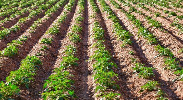 Governo de Alagoas recebe pauta de movimentos agrários