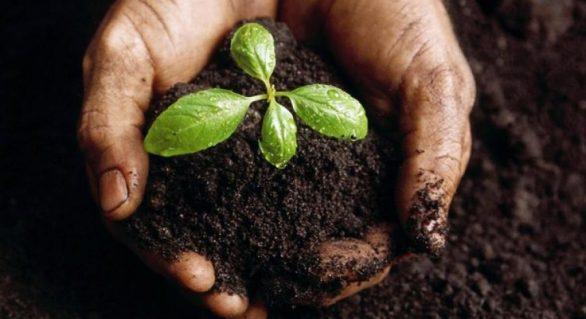 Alagoas vai sediar encontro regional de Agroecologia do Nordeste