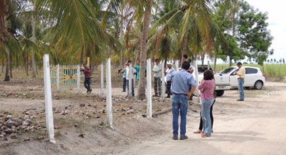 Parceria desenvolve projeto para revitalização dos coqueirais em AL