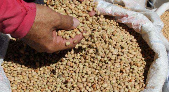 Preço do feijão cai em sete capitais nordestinas; maior redução foi em Maceió