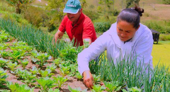 Nove produtos da agricultura familiar receberão bônus este mês