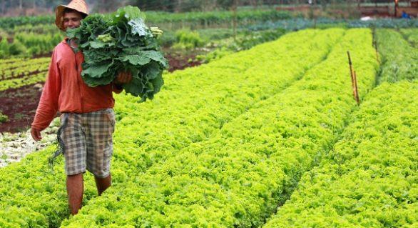 Faeal alerta produtor rural para o preenchimento do ADA