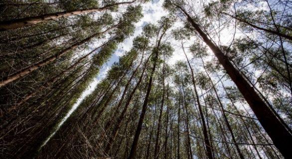 Fontes Renováveis representam 75% da matriz energética de Alagoas