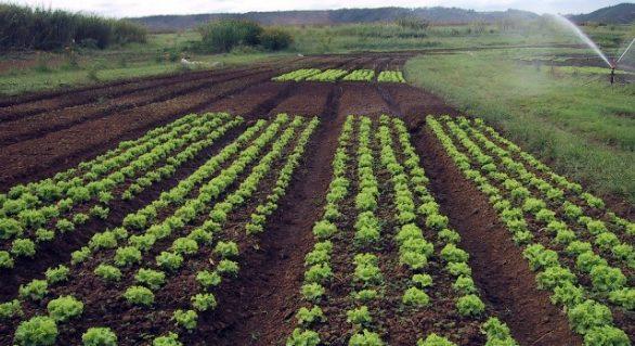Pindorama recebe capacitação em cultivo de hortaliças orgânicas