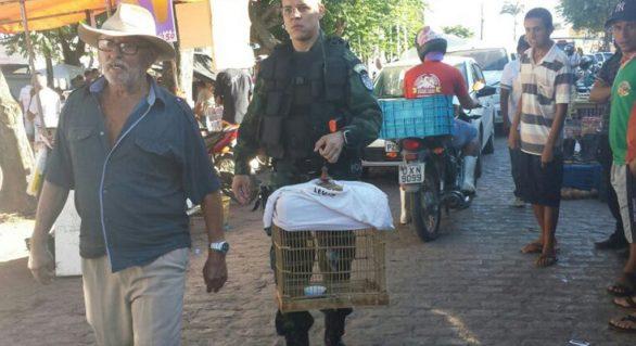 Mais de 270 animais silvestres são resgatados na região de Arapiraca