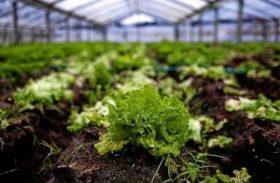 Emater capacita jovens de Pindorama em Agroecologia e Produção de Hortaliças