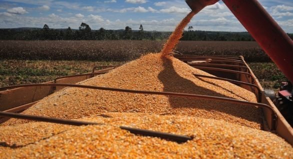 Conab contrata transporte de milho para venda a pequenos criadores do Norte e Nordeste