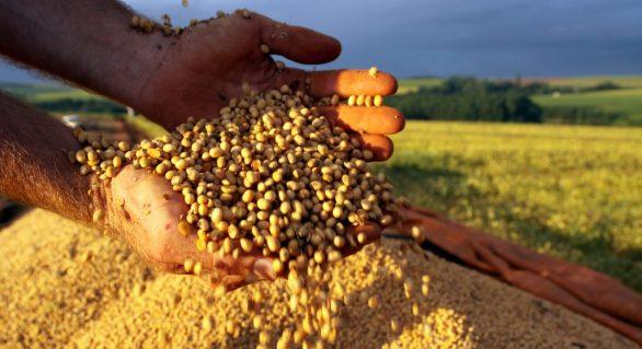 Política deixa mercado de soja nervoso e dispara algumas vendas; alguns adotam cautela