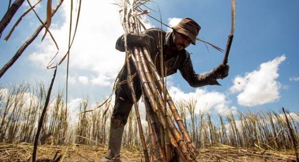 Trabalhadores canavieiros alertam sobre risco de uma safra reduzida