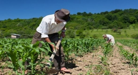 Produtores rurais do Agreste recebem capacitações em Redes Associativas