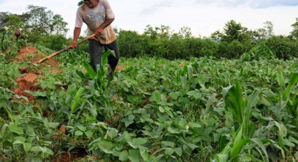 Agricultores recebem mais uma parcela do Seguro Garantia-Safra