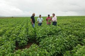 Seagri faz visita técnica em áreas de soja e milho em Alagoas