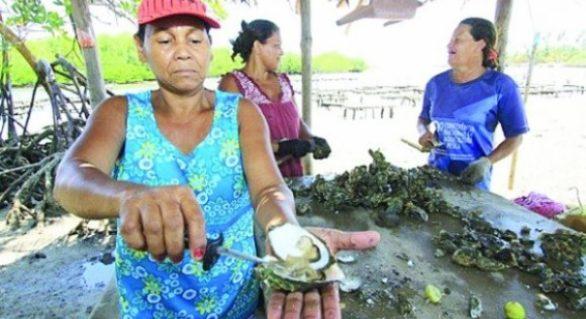 Seagri distribui equipamentos a produtores de ostras
