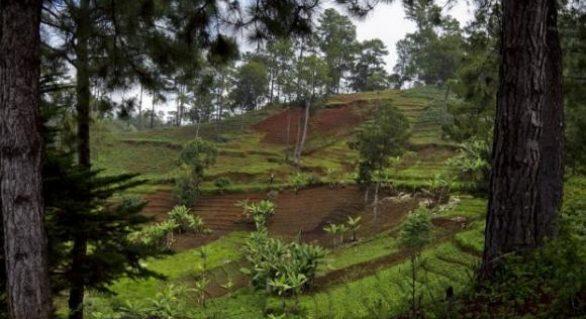 Excesso de químicos prejudica solos e agricultura em todo o mundo, diz ONU