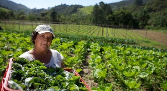 Chamada pública vai beneficiar o pequeno agricultor em Alagoas
