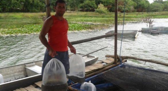 Seagri supera a marca de de 1 milhão de alevinos distribuídos em 2017