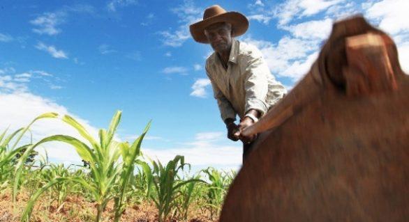 Alagoas receberá R$ 1 mi para fortalecer segurança alimentar e nutricional no Estado