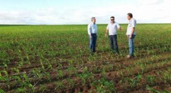 Produtor de Sergipe investe na plantação de milho em Alagoas