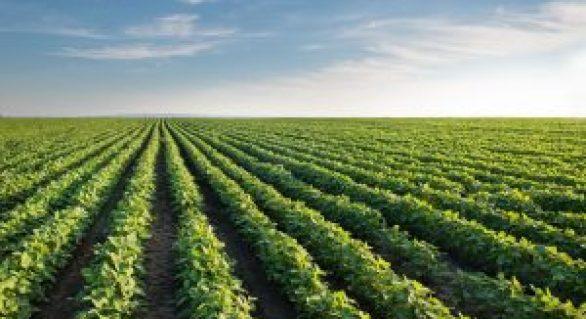 Sebrae e parceiros promovem Seminário Perspectivas para o Agronegócio em Alagoas