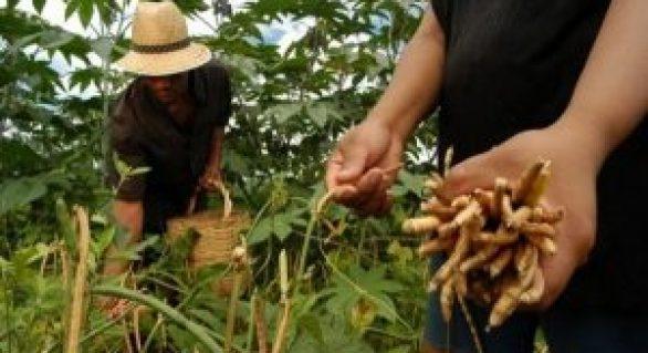Seguro Garantia-Safra destina R$ 3,6 milhões a produtores alagoanos