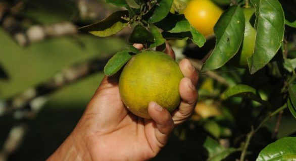 Brasil perdeu espaço no mercado agrícola mundial, afirma OMC