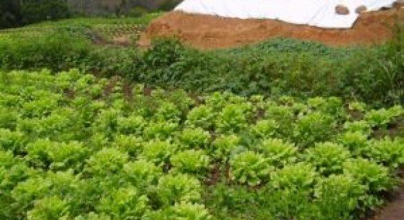 Governo distribui equipamentos que beneficiarão mil agricultores familiares