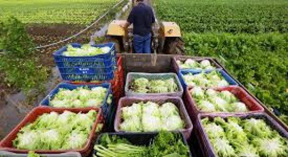Novo sistema disponibiliza chamadas públicas para agricultura familiar