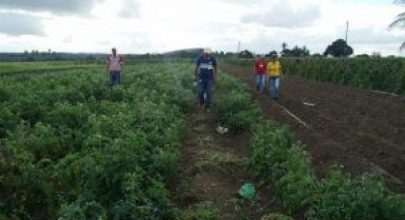 Com assistência da Emater, agricultor do Agreste aumenta renda em mais de 40%