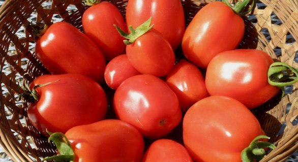 Ufal desenvolve pesquisas de alto nível no melhoramento genético de sementes