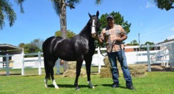 Vale Rico adota política de respeito ao cavalo