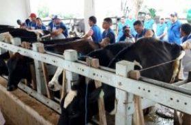 Expo Bacia Leiteira oferece curso de inseminação artificial de bovinos