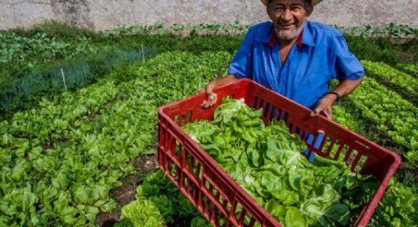 Agricultura Familiar deve receber investimentos de R$ 23 milhões do Fethab