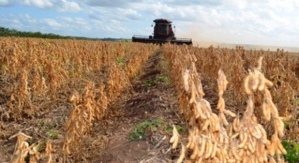 Agricultura promove Dia de Campo sobre cultura da soja
