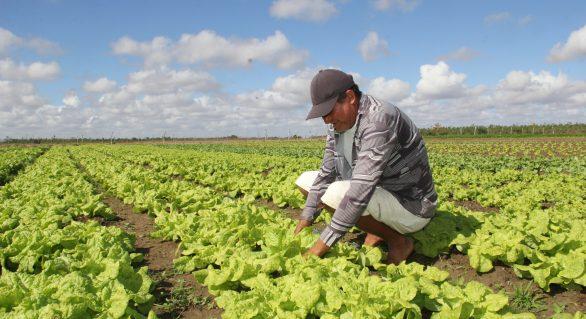 Prefeitura vai disponibilizar mais de R$ 1 milhão para pequenos agricultores