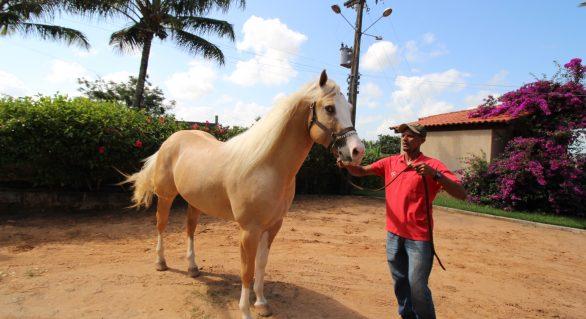 5ª Alagoas Quarter Horse abre temporada de leilões da 67º Expoagro