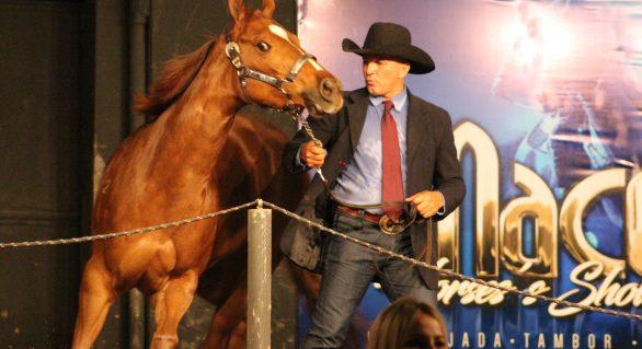Leilão Maceió Horse's Show ostenta credibilidade de 12 anos no mercado
