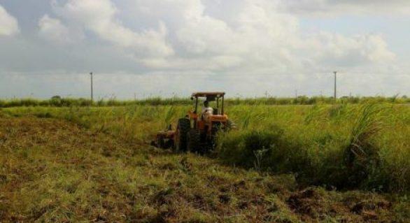 Prefeitura de Pilar vai entregar 2000 metros quadrados de terra para agricultores