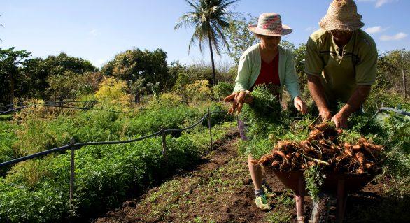 Fetag-AL realiza quase 4 mil cadastros de agricultores familiares