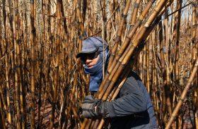 Trabalhadores canavieiros preparam calendário de negociação para campanha salarial