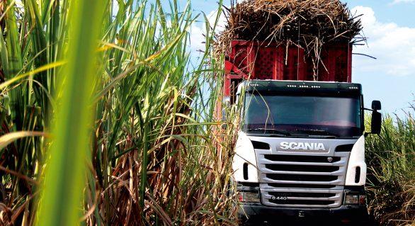 Usinas já beneficiaram quase um milhão de toneladas de cana