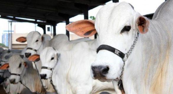 67ª Expoagro/AL terá programação técnica voltada para o setor agropecuário