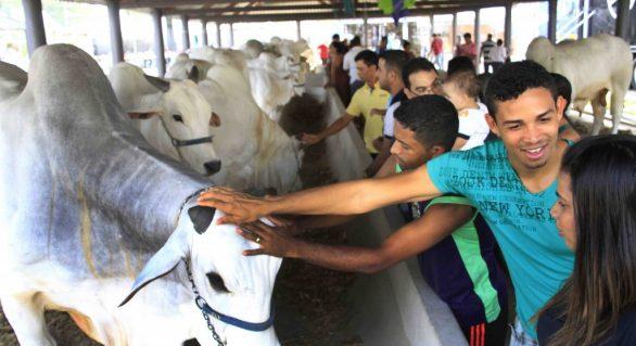Parque da Pecuária deve receber mais de 2 mil animais na Expoagro