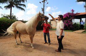 5º Alagoas Quarter Horse apresenta Tropa nesta quarta-feira (18)