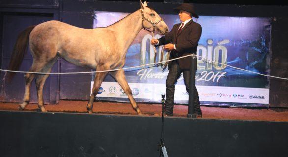 Leilão Maceió Horse's Show cresce 40,9%
