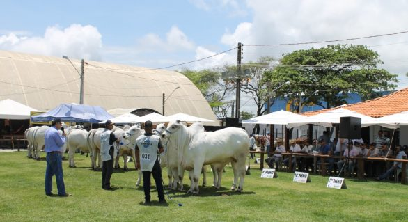 Julgamentos de animais movimentam 67ª Expoagro/AL