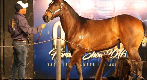 Leilão Maceió Horse's Show disponibiliza o melhor da genética do QM