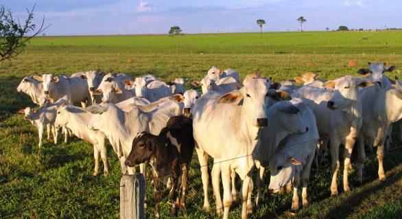 Encorte terá palestra da diretora da Sociedade Rural Brasileira
