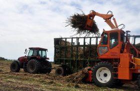 Usina Pindorama já beneficiou 233,5 mil toneladas de cana as safra 17/18